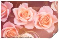 Creamy dreamy pink roses bouquet, Print