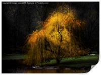 Weeping Gold, Print