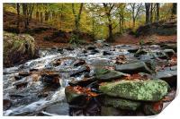 Autumnal colours in Roddlesworth - Tockholes woods, Print
