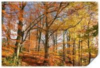 Autumn Colour in Derbyshire, Print