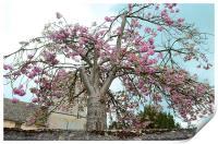 Blossom Tree, Print