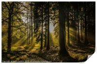 Little Coombe Woods Golden Glow, Print