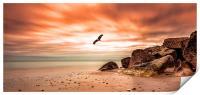 Eagle flying over Hengistbury Head, Print