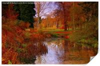 Autumns Golden Colour, Print