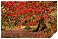 Autumn Leaves, Print