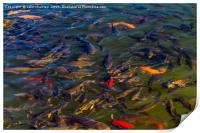 Fish in the Black Dragon Lake, Lijiang, China, Print