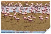 A Flamboyance of Flamingos, Print
