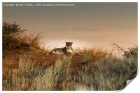Lioness in the Last Rays of the Sun, Print