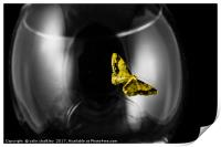 Moth on a wineglass, Print