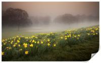 Misty Daffodils, Print
