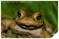 Frog, Print