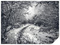 Snow Path, Print