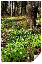 Spring Flowers, Print