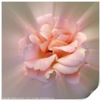 Golden pink, Print