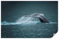 Whale Tail, Print