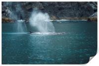 Humpback Whales Spouting, Print