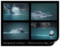 Humpback Whales Collage, Print