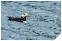 Horned Puffin, No. 1, Print