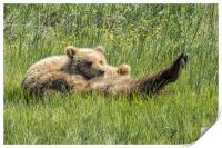 My Foot's So Pretty, Oh So Pretty - Bear Cubs, No., Print