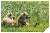 Unbearably Cute - Bear Cubs, No. 5, Print
