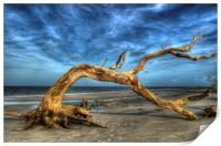 Wind Bent Driftwood, Print