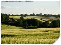 Summer Barley Fields, Print