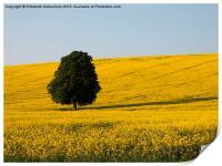 Beech Tree in Yellow Field, Print