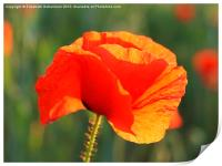 Just One Red Poppy, Print