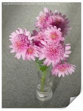 Chrysanthemum Beauty, Print