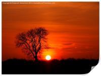 Tree silhouette in a sunset blaze, Print