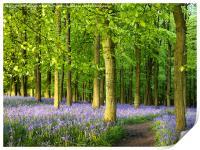 Path through Bluebell Wood., Print