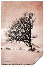 Western Wind, Print