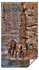 Baby Elephant Shower, Print