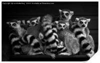 Gang Of Ring-Tailed Lemurs, Print
