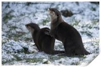 Otters In The Snow, Print