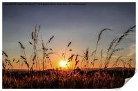 Sunset Grass, Print