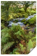 Flowing Beside The Ferns., Print