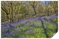 Bluebell hillside, Print