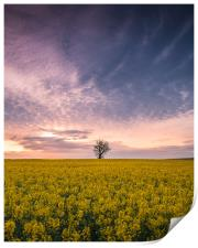The Tree Stands Alone, Print