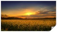 Sunset over the Yellow Fields, Print