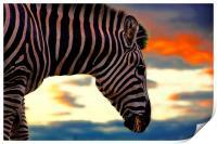 zebra at sunset, Print