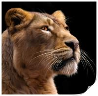 Lioness 2, Print