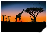 giraffes at sunset, Print