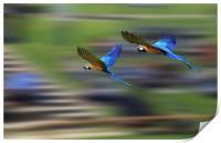 Flying Display, Print