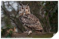 Eurasian eagle owl, Print