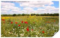 Kent countryside meadow, Print