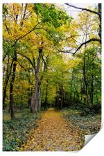 Path of Gold, Print