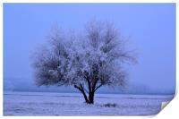 Iced Tree, Print