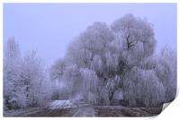 Wintry Weeping Willow, Print