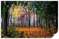 Colours of Autumn, Print
